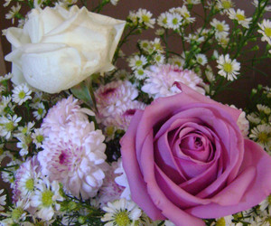 decor, roses, and flowers image