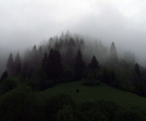 forest and fog image