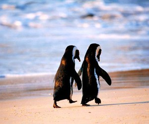 penguin, love, and animal image