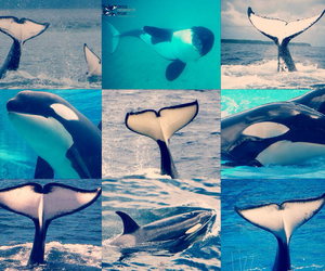born, free, and orcas image