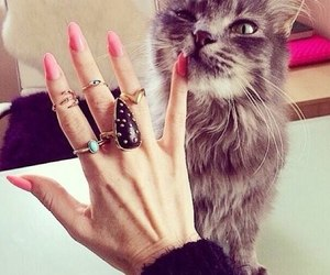 cat, nails, and pink image