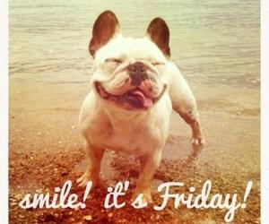 friday, smile, and dog image