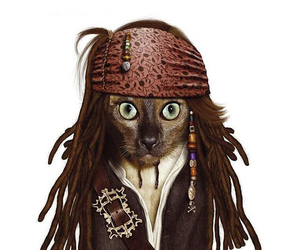 cat and jack sparrow image