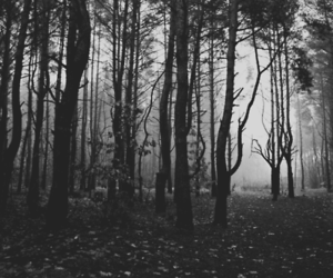 black, black and white, and forest image