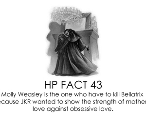 bellatrix, molly, and hp facts image