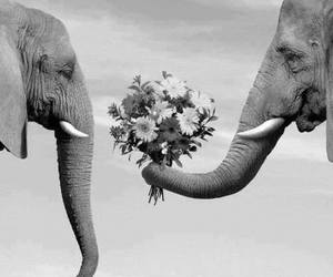 love, elephant, and flowers image