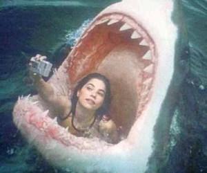 shark, funny, and selfie image