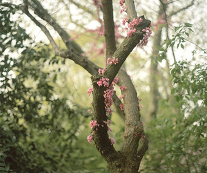 tree, nature, and blossom image