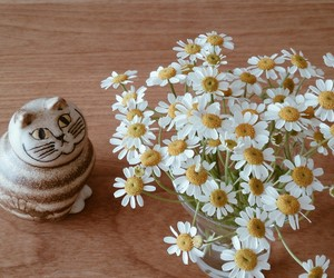 cat, 花, and flower image