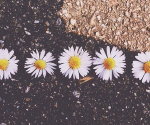 flowers, tumblr, and daisy image