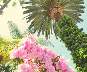 flowers, palm trees, and pink image