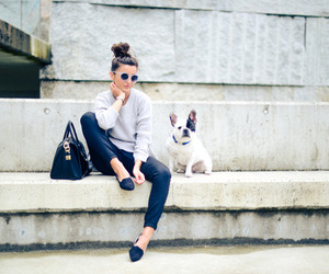 dog, fashion, and style image