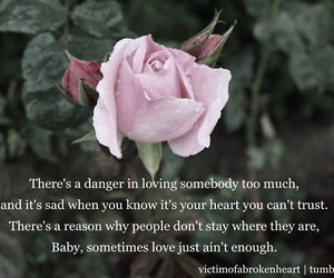 pink rose, quote, and rose image