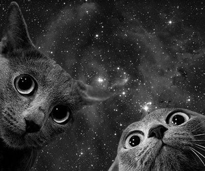 cats, space, and selfie image