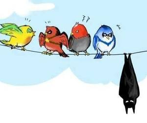 batman, robin, and birds image