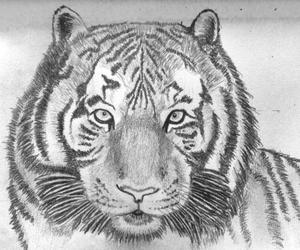 animal, belgium, and black and white image