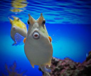 poisson image