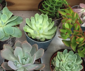 trader joes, baby plants, and my babies image