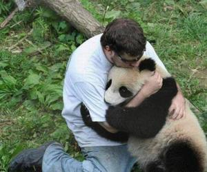 panda, animal, and hug image