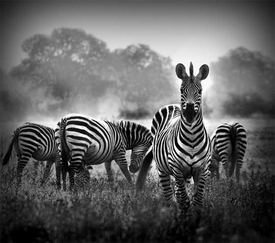 Beautiful black and white nature photography inspiration