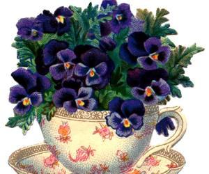 violets image
