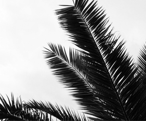 summer, nature, and palm image