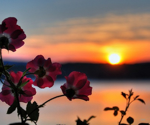 flowers, sunset, and rose image