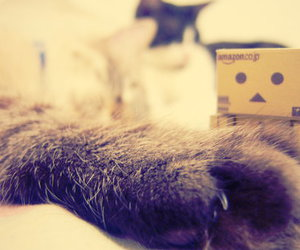 cat, kittens, and paw image