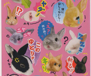 rabbit and sticker image