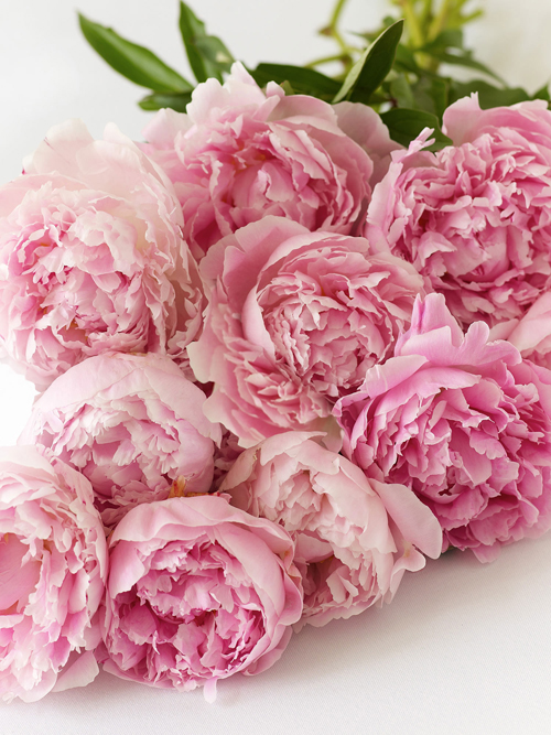 beautiful, peonies, and flower image