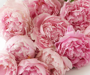 flower, flowers, and peonies image