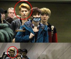 exo, funny, and exo troll image
