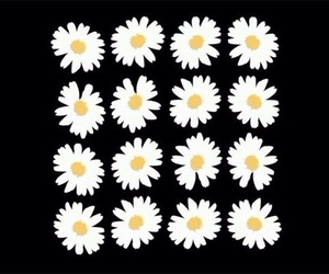 flowers, daisy, and black image