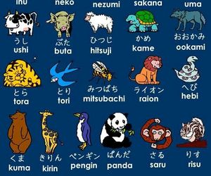 animal, japanese, and japan image