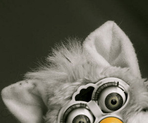 bird, evil, and fury image