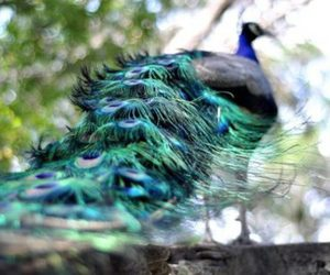 beauty, feathers, and blue image