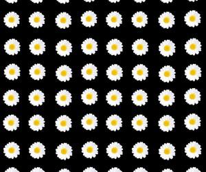 background, black, and daises image