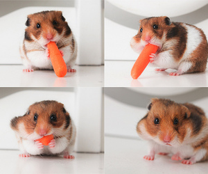 awn, lol, and carrot image