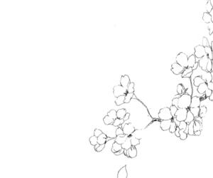 flower and sakura image