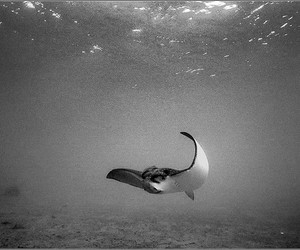 scuba diving, west palm beach, and wpb image