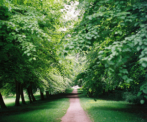 green, nature, and landscape image