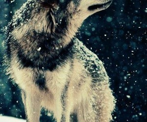nature, wolf, and snow image