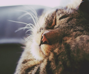 cat, free, and relax image