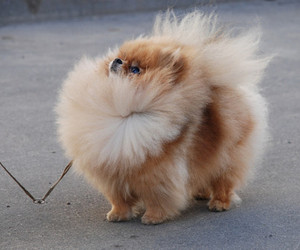 dog, cute, and fluffy image