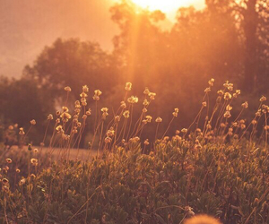 flowers, sun, and nature image