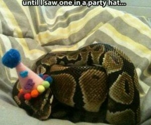 funny, snakes, and cute image
