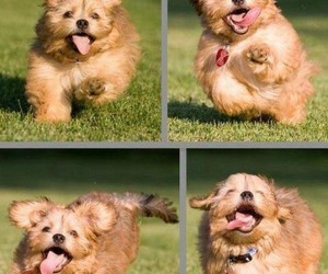 dog, puppy, and funny image