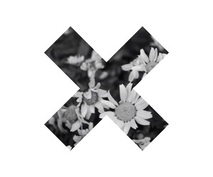 black and white, daisies, and indie image