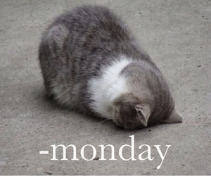 monday and cat image