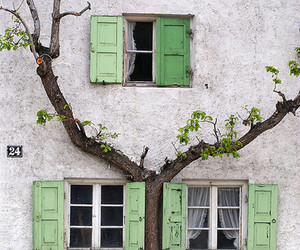 tree, house, and green image